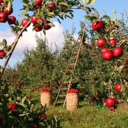 Article - Embauche d'emplois saisonniers